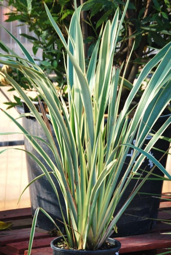 Acheter des plantes vivaces marseille jardinerie des for Acheter plante